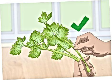 Prepoznavanje kvarjenja v navadni zelenjavi