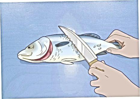 Gjakderdhja, Zbutja dhe Gutting i Peshqve