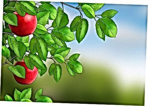 Збір яблук з дерева