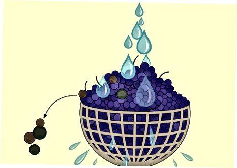 Savo vynuogių sulčių kūrimas