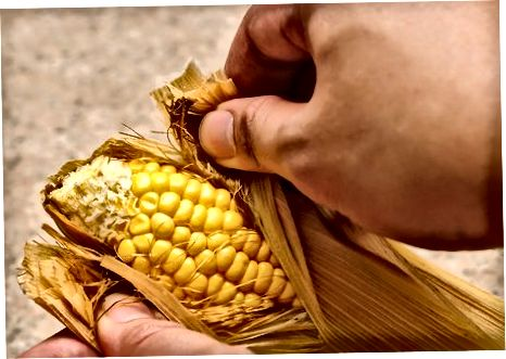 Кукуруз на клипу