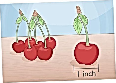 Pripažinimas prinokusių vyšnių