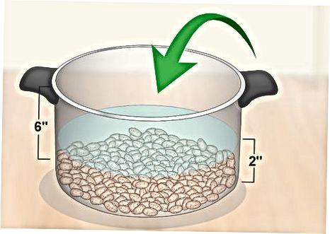 Сољење и натапање сушених зрна пинтоле