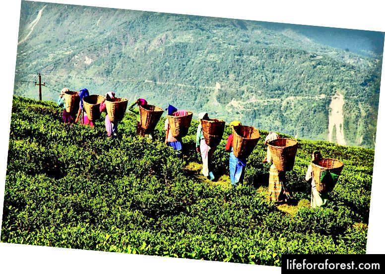 Tôi đã học được rất nhiều về Johrat khi viết bài này; Nó khá là trung tâm văn hóa của Assam và có rất nhiều trà. Tốt hơn nhiều so với một hình ảnh của nụ cười gần như không răng của tôi.