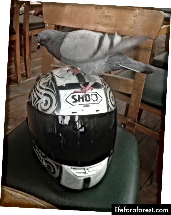 Доступна камера з видом на очі з пташиного польоту