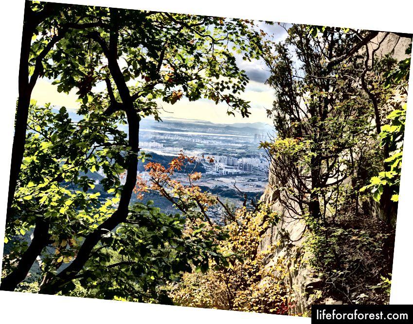 Séoul se profile au loin à travers l'une des rares petites ouvertures dans les arbres