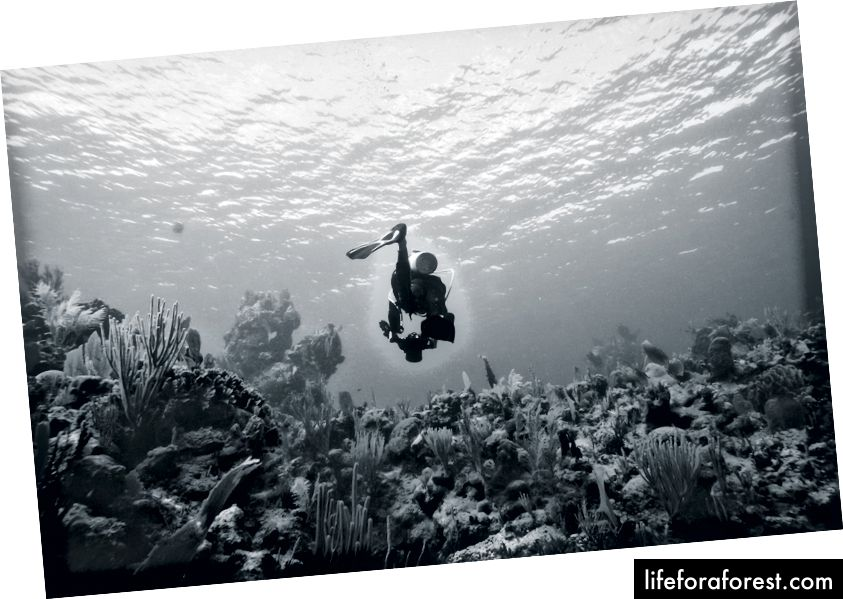 Viktor jaktet på sitt neste motiv under et kurs i fotografering under vann under sine reiser.