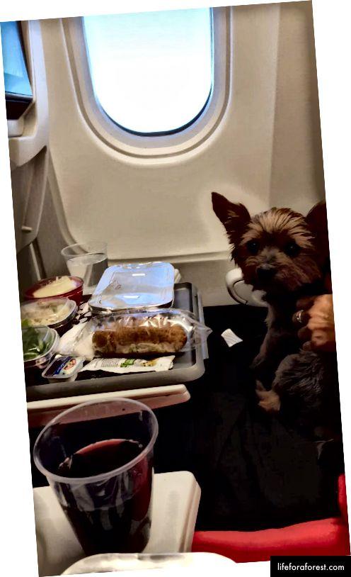 Lu på sin første flytur.