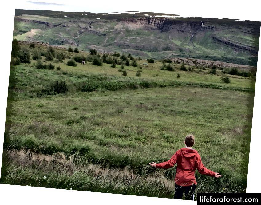 Ser på en rein løpe av i nærheten av Egilsstaðir
