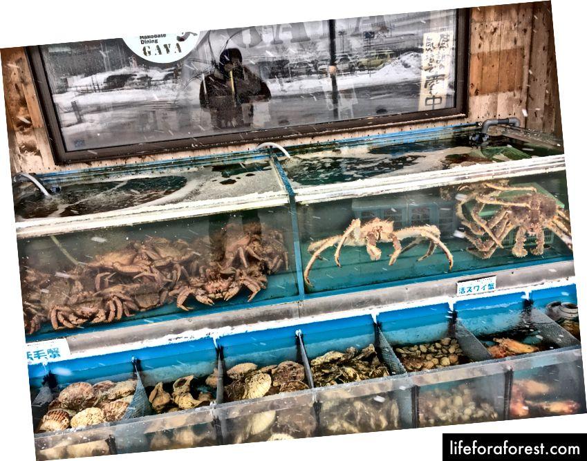 Dengiz oziq-ovqat do'konlarini ko'plab yirik yo'llarda topish mumkin, ular katta qisqichbaqalar va turli xil chig'anoqlarni taklif qiladi.