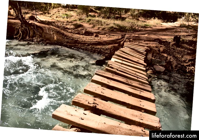 Những cây cầu lắc lư và chao đảo - mùa thu don don!