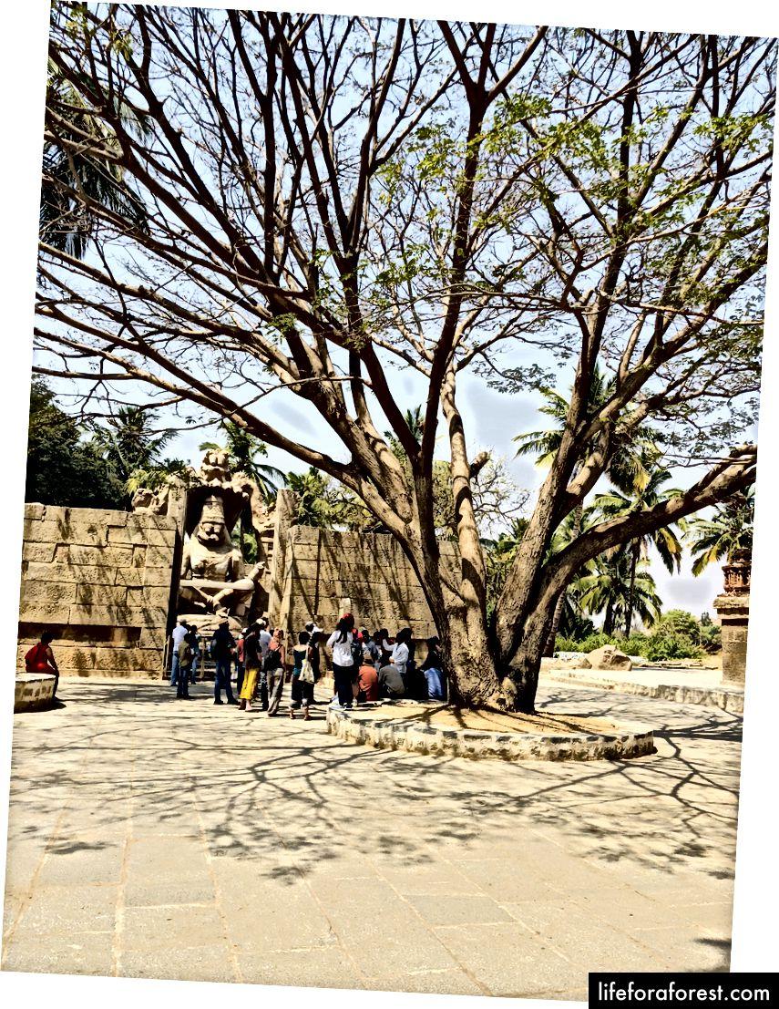 Grup bersepeda kami dari kejauhan. Sebuah pohon rindang dulunya satu-satunya rahmat yang menyelamatkan dalam cuaca yang keras.
