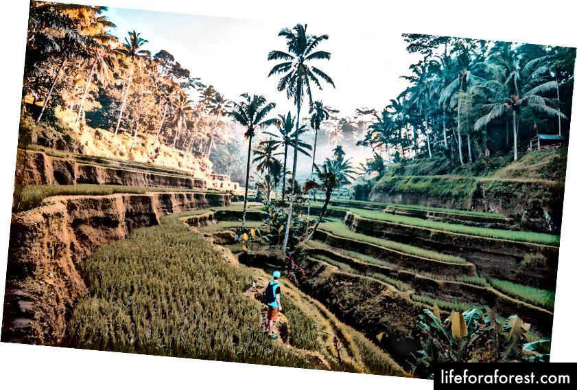Bali 2018 yilda eng issiq joylardan biri. Fotosurat: Jeymi Fenn.