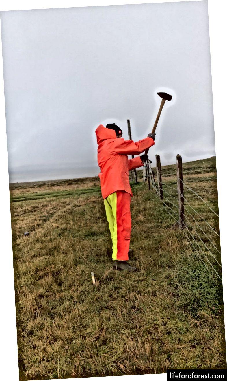 Sửa hàng rào trong mưa - Tháng 8 năm 2017 - Ảnh của Ali