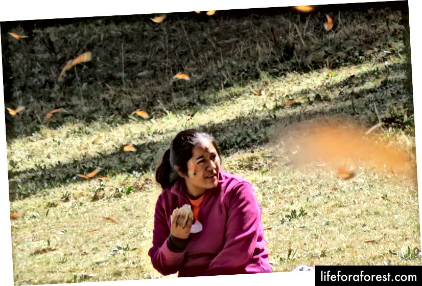 Ana ở El Llano de Tres Gobernadores trong một cơn bão bướm chúa.
