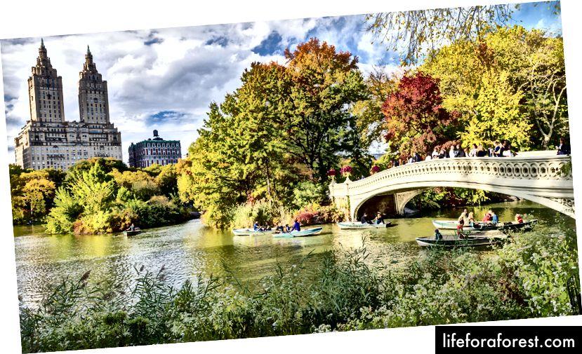 Єдине місце для відпочинку від постійного нью-йоркського гудіння