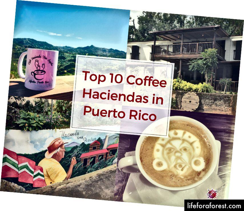 Kaffe Haciendas i Puerto Rico: Hacienda Tres Angeles, Hacienda La Mocha, Hacienda Tres Picachos, og Café Nativo