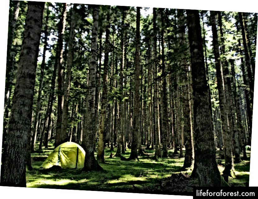 En skog i fjellene i Racha