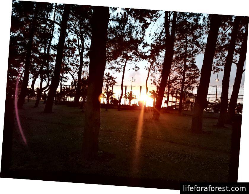 Auringonlasku puistossa