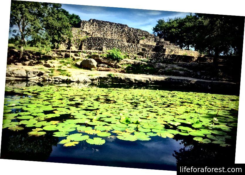 Peldieties starp ūdensrozēm Dzibilchaltún cenotes.