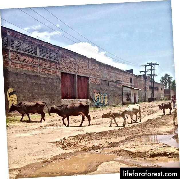 Rett over hovedveien ved supermarkedet er barrioen mye mindre turistvennlig. Veiene er ikke asfaltert, dyr går gatene fritt, og det er periodiske strømproblemer.