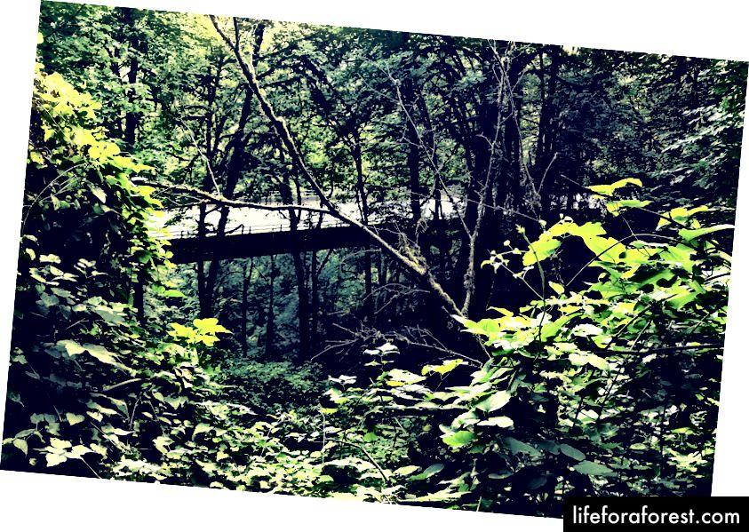 Provenance Hotels'i külalised saavad liituda juhendatud radadega ja läbida Portlandi metsamaa radu.