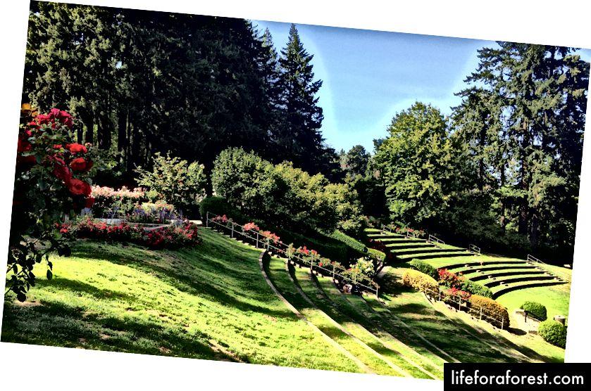 Roosiaias tuntud uimastatavas avalikus pargis elab üle 10 000 roosi.