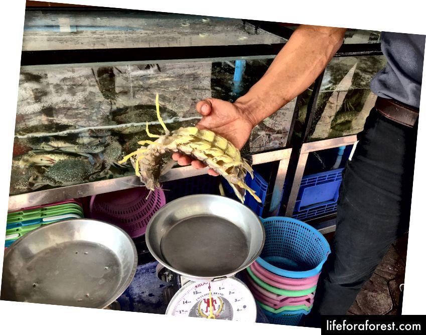 A Mantis-reke, PaTong, Thailand (Donna Kos)