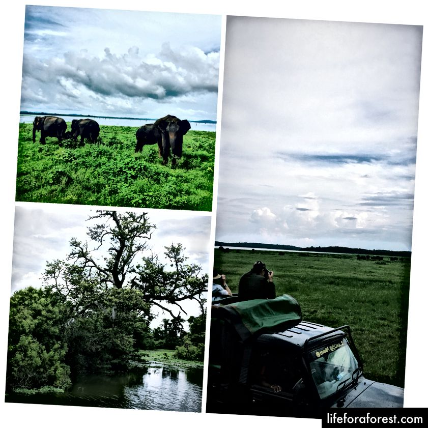 1/3. Wathcing Elephants in Kaudulla National Park, 2. Habarana Lake