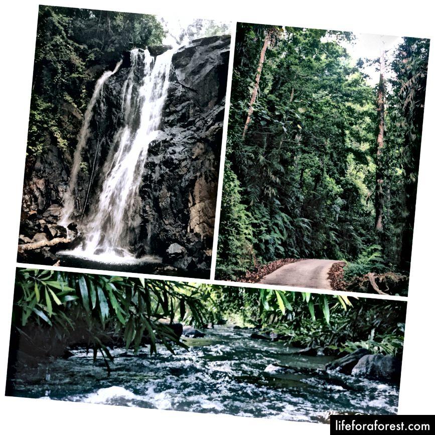 1. Duwili Ella v deštném pralese Sinharaja, 2. Cesta do Lankagamy, 3. Hakgedi Ella