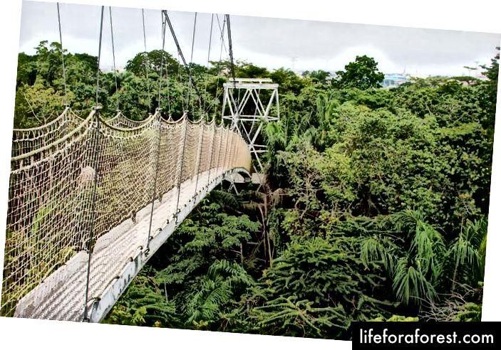 ศูนย์อนุรักษ์ Lekki, ลากอส, ประเทศไนจีเรีย - ทางเดินที่ยาวที่สุดในแอฟริกา