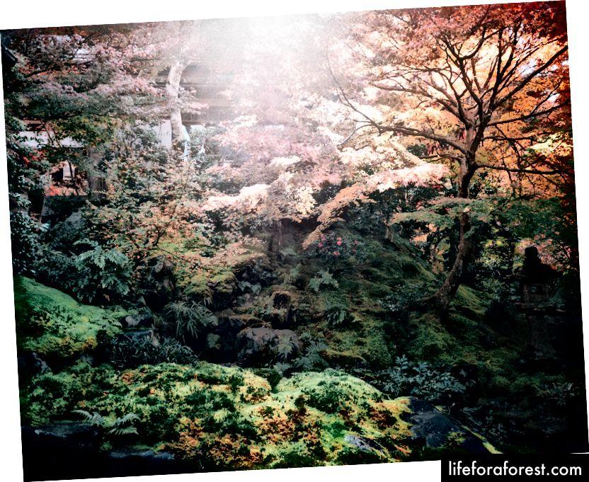 Dette er den vakre hagen til Rurikouin.