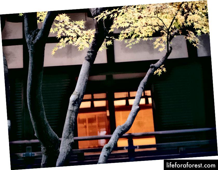 Shourenin-monzeki, Higashiyama Kyoto