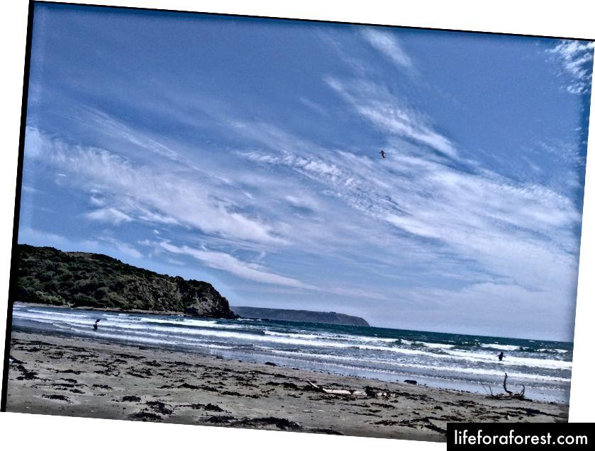 Imej: Pantai yang selamat dan kosong di NZ. Sumber: harta pengarang asal. Tolong jangan gunakan tanpa kebenaran bertulis.
