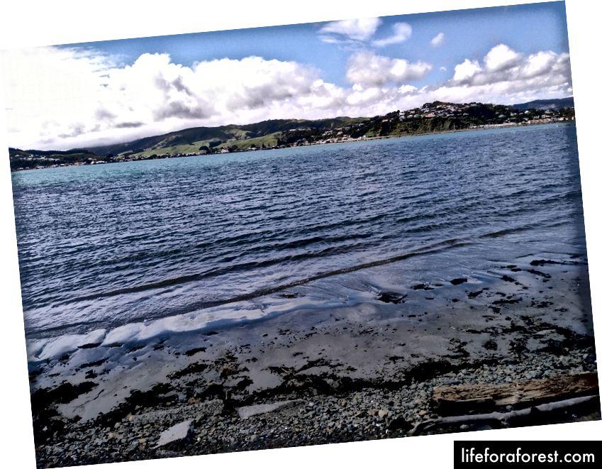Imej: Pemandangan Laut, Wellington New Zealand. Sumber: harta pengarang asal. Tolong jangan gunakan tanpa kebenaran bertulis.