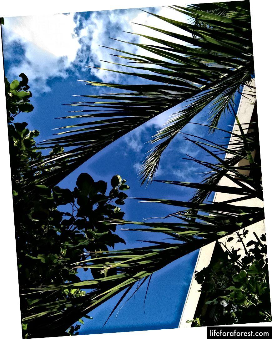 Hình: cây cọ và bầu trời xanh. Nguồn: tài sản gốc của tác giả. Xin vui lòng không sử dụng mà không có sự cho phép bằng văn bản.