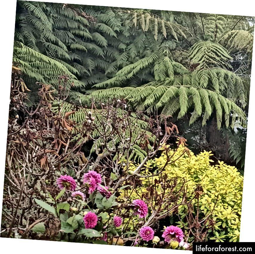Imej: pelbagai kehidupan tumbuhan di New Zealand (bunga magenta terang, daun, pokok-pokok pulau). Sumber: harta pengarang asal. Tolong jangan gunakan tanpa kebenaran bertulis.
