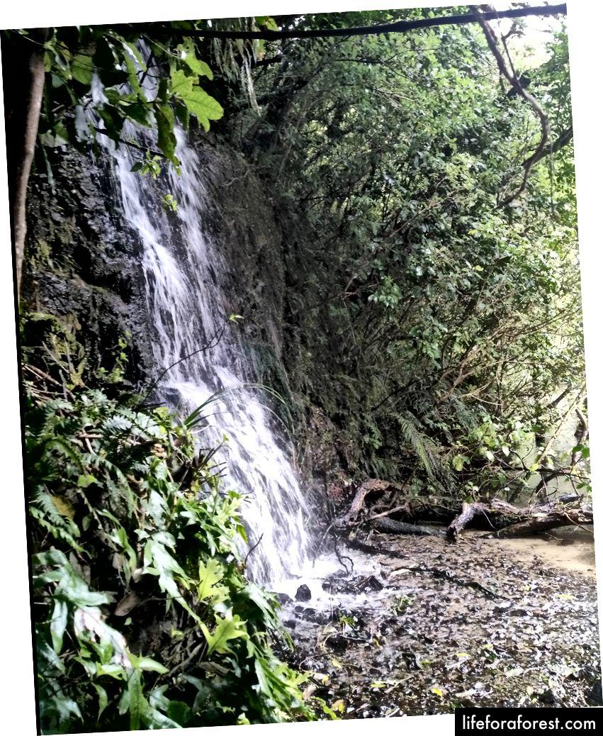 Imej: Air terjun di NZ. Sumber: harta pengarang asal. Tolong jangan gunakan tanpa kebenaran bertulis.