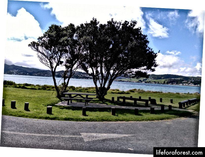 Hình: Quang cảnh đường phố với công viên, New Zealand. Nguồn: Tài sản gốc của tác giả. Xin vui lòng không sử dụng mà không có sự cho phép bằng văn bản.