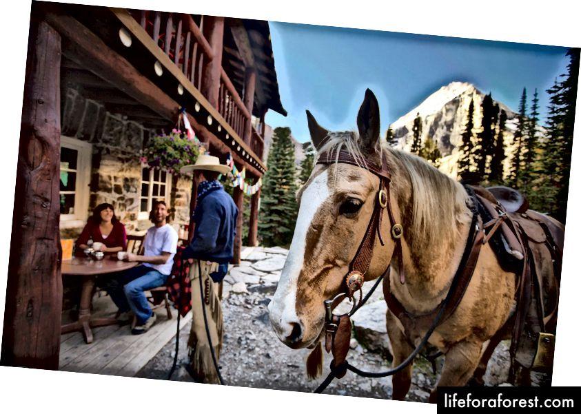 https://www.brewsteradventures.com/summer-trail-rides