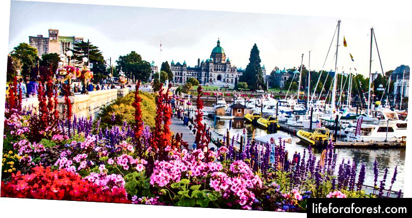 Victoria om våren. Bilde fra Tourismvictoria.com