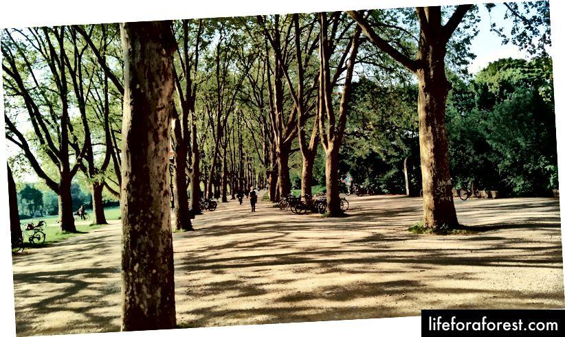 Gå til vertskapets hus fikk meg til denne træraden på et universitet i Köln, Tyskland. Eh, trærne her i NTU forskjellige.