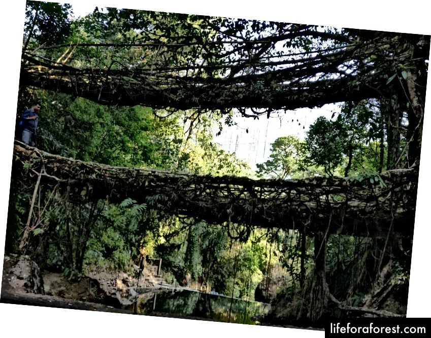 Cầu gốc hai tầng. Chuyến đi đến Nongriat là nơi duy nhất mà bạn sẽ tìm thấy phiên bản Double Decker của cây cầu.