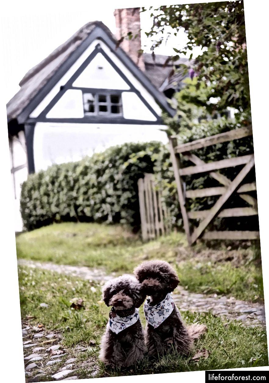 Foto av The Poodle Gang på Unsplash