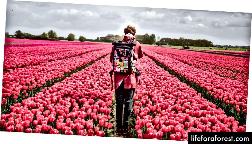 Các lĩnh vực ở Bắc Hà Lan bên ngoài Alkmaar © ChristopherLarson