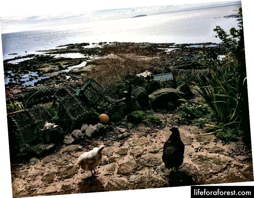 Teras di Galeri Harbour dan Tearoom, dibagikan dengan ayam pemilik.