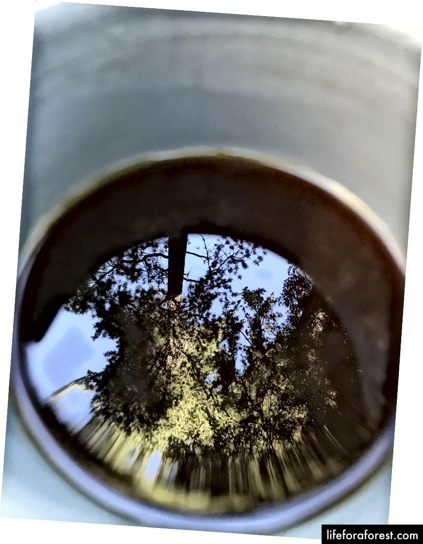 Nicks superkunstige bilde av Sequoias gjenspeiles i kaffen hans. : Nick Roberts