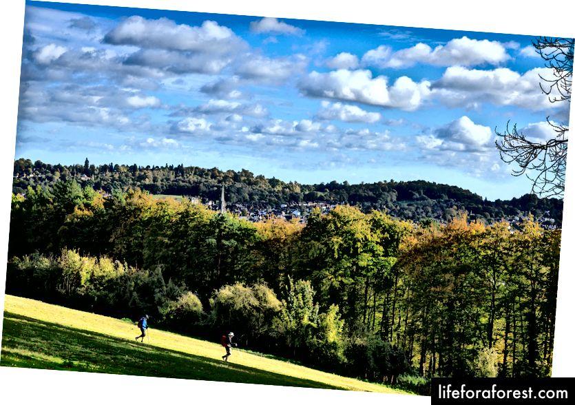 Nhấn những con đường mòn trên những ngọn đồi gần đó xung quanh Dorking. Ảnh tín dụng: John Miller