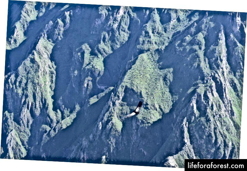 Cuối cùng, nơi bạn Wllll Andean Condor, biểu tượng quốc gia