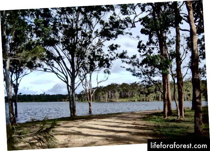Đập Tinaroo được hoàn thành vào năm 1958 và tưới cho diện tích đất nông nghiệp là 415 km2 mỗi năm